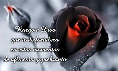 Imágenes De Flores Para Luto Rosas De Duelo Y Condolencias Fotos