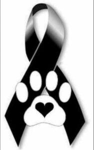 Fotos de luto para un perro