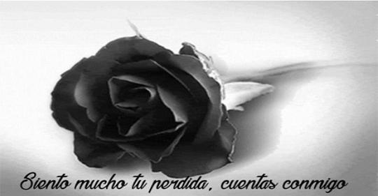 Fotos de luto con una rosa