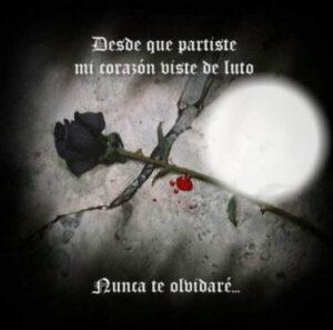 de luto con rosa nunca te olvidare